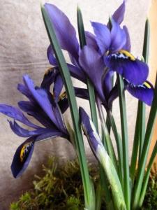spring 105