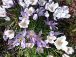 spring 127