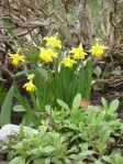 spring 132
