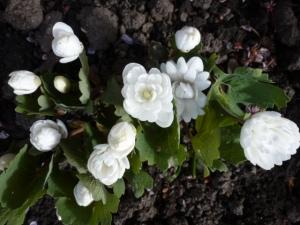 spring 157