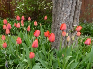 spring 162
