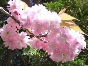 spring 182