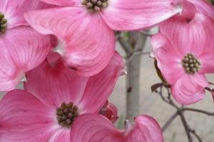 spring flowers 012