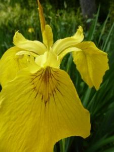 flowers-foliage 107