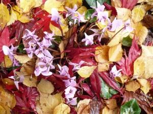 autumn 050