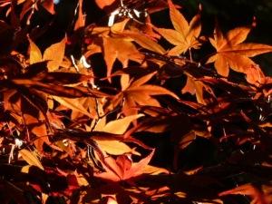 autumn 163