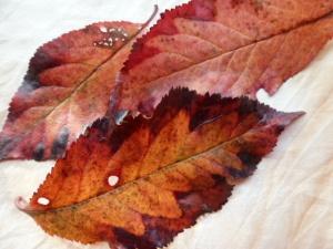 autumn 135