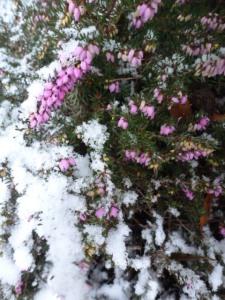 winter 2119