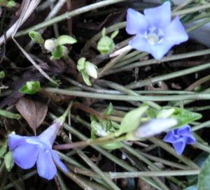 spring 219