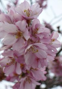 spring 137