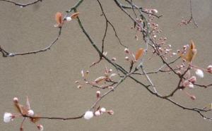 spring 222