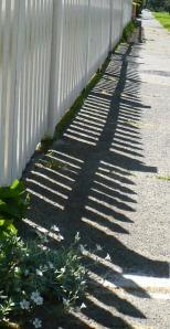 spring-shadows 005